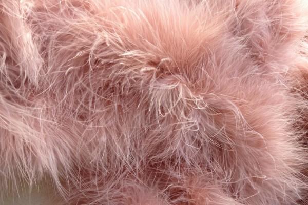 Marabout en plumes d'oie